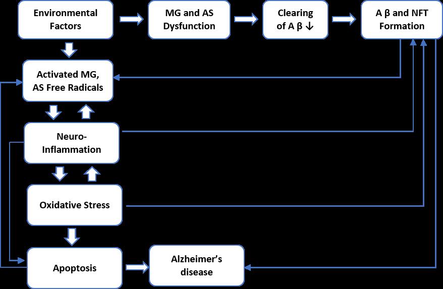 Figure 3. Pathogenesis of Alzheimer's disease